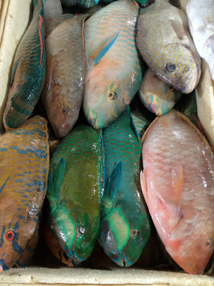 fish-of-every-colour-Jimbaran