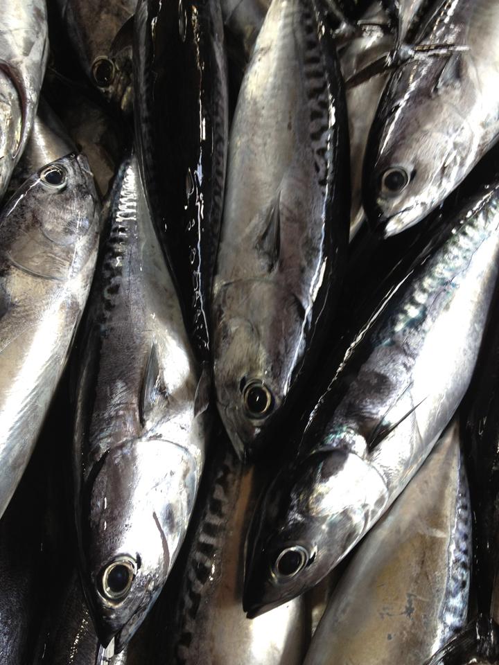 fishmarket,-Jimbaran