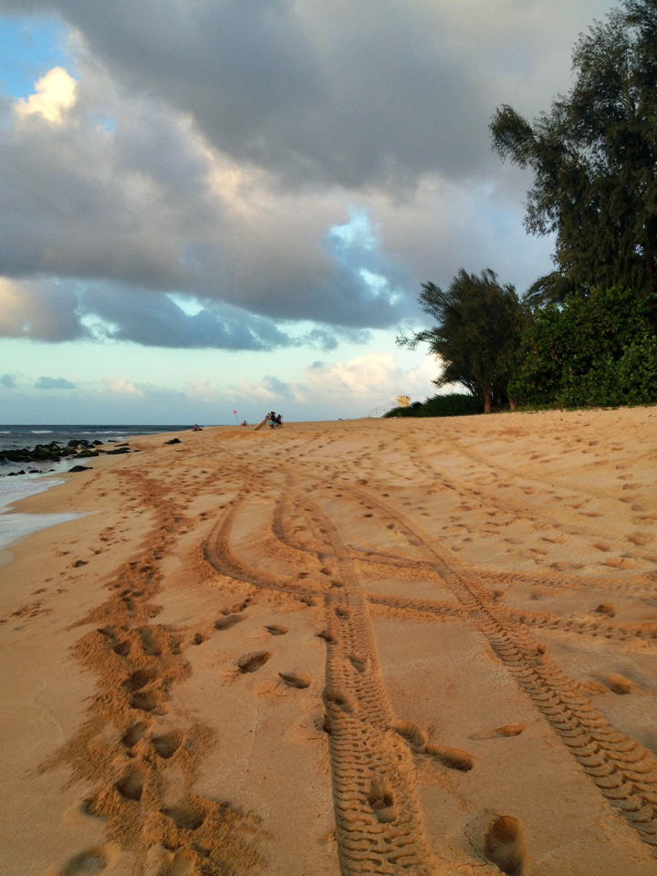 tracks-in-sand
