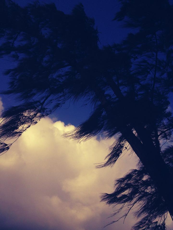 tree-skyblue