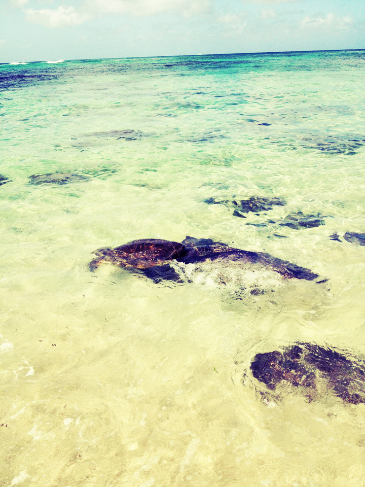 turtle-beach1