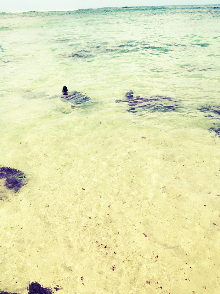 two-turtles,-turtle-beach-Oahu