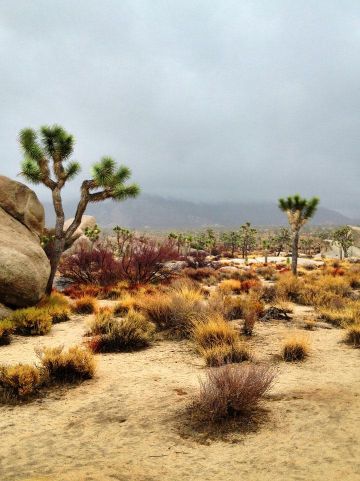 driving-rain-in-desert1