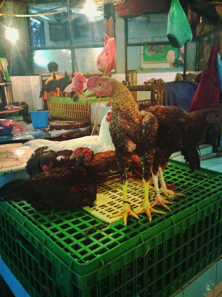 Jakarta sad chickens Pasar Tebet