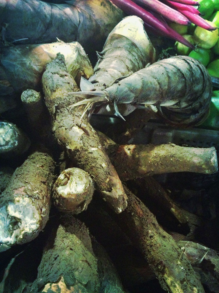 Tapioca roots in jakarta market