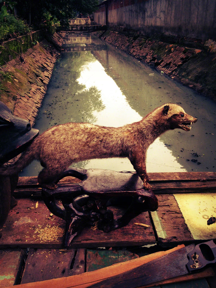antique-jakarta-pasar-jalan-surabaya-civet-on-bridge
