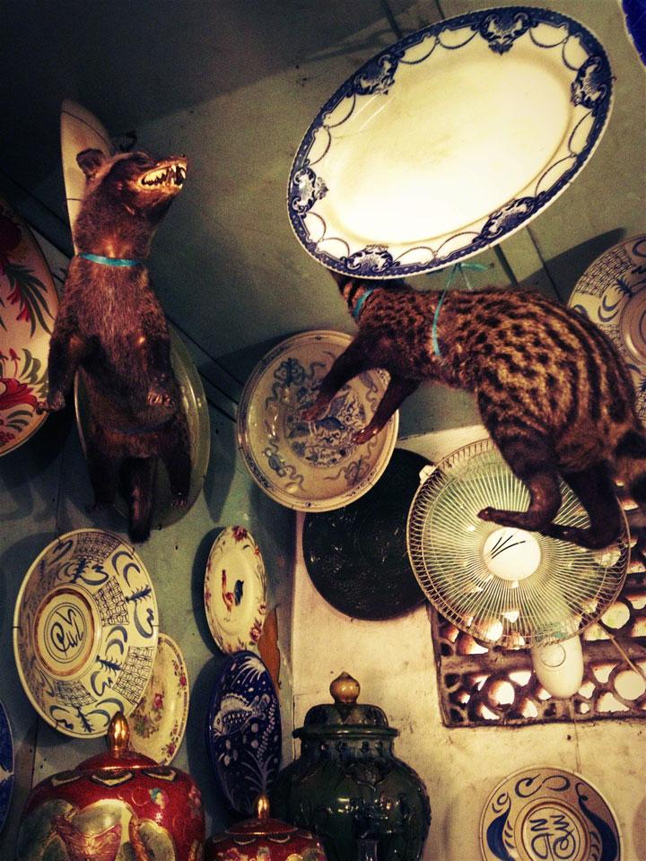 jakarta-antiques-jalan-surabaya-civet-cats