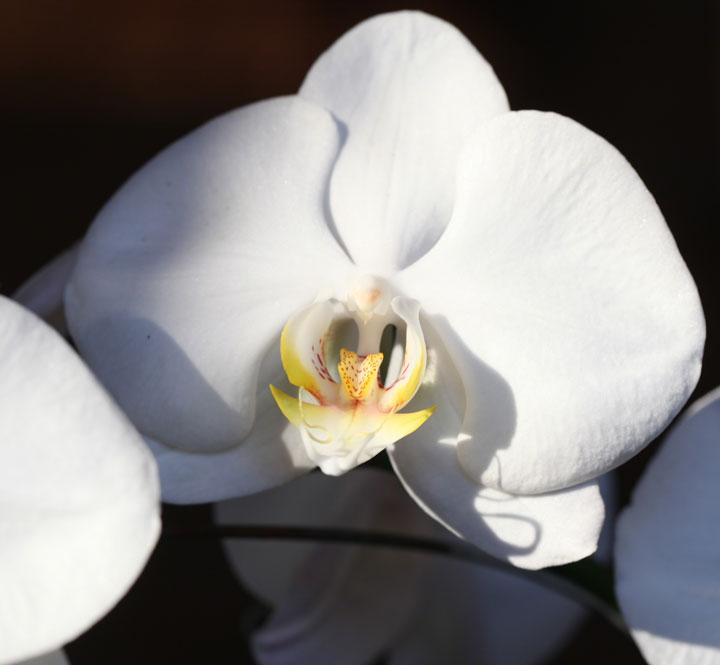 bali-orchid-sanur