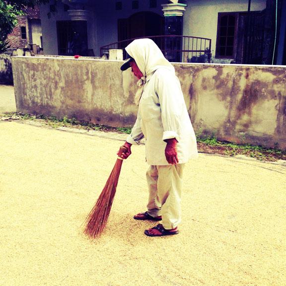 jogja-kampung-rice-harvest-3