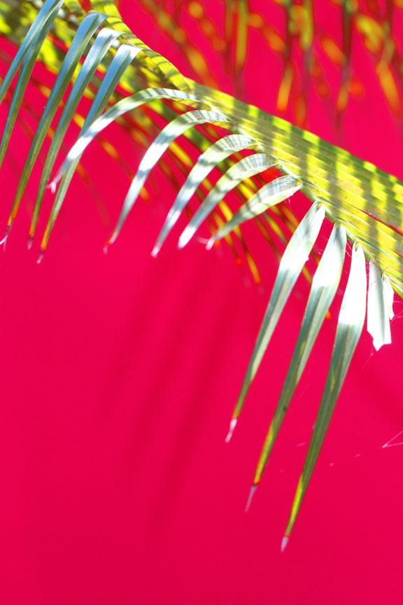 palm-tree-pink-wall-sanur