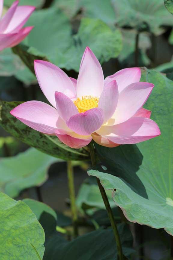bali-seminyak-metis-lotusone