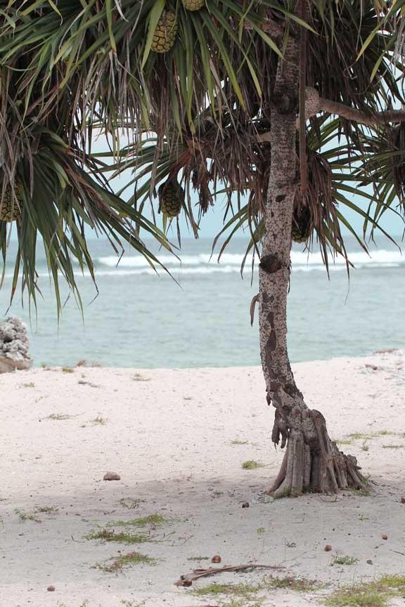 beach-tree-gili-trewangan-lombok