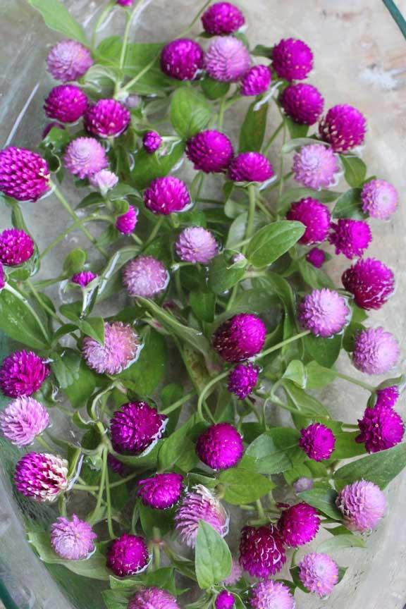 bunga-ratna-bowl