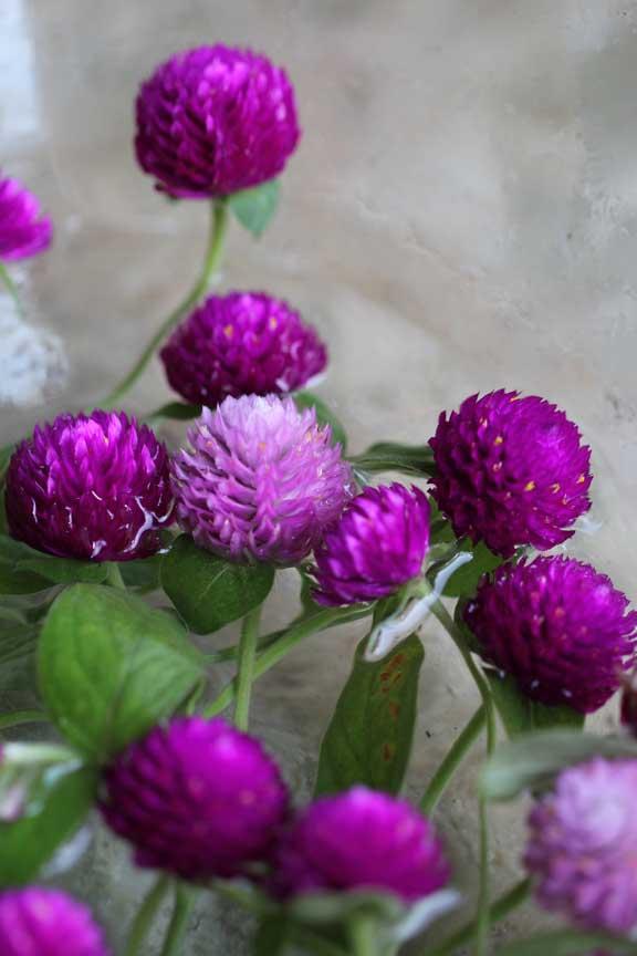 bunga-ratna