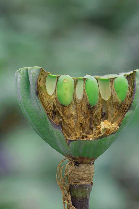 smiley-green-teeth