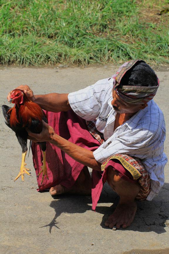 cock-fighting-bali-rural-life
