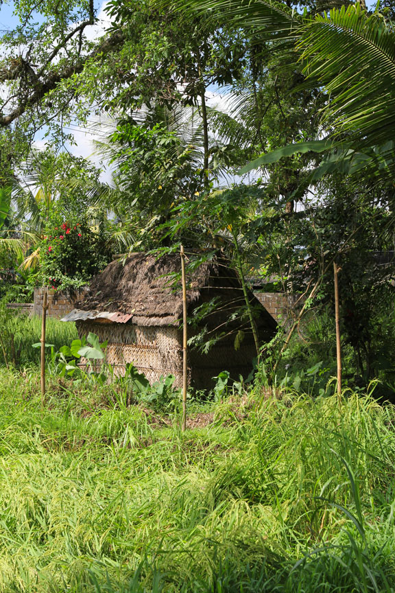 cowhut-jungle-bali