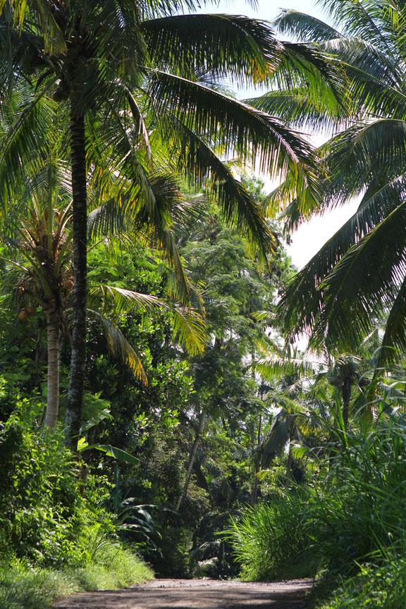 jungle-bali-road