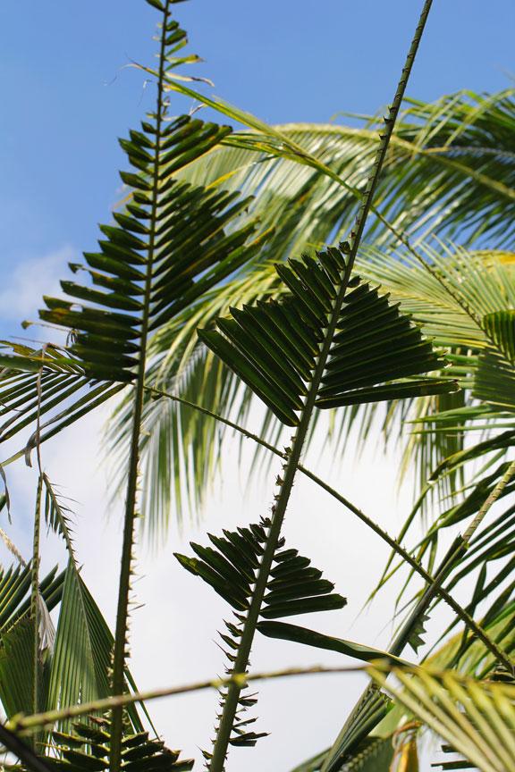 palmfronds-bali