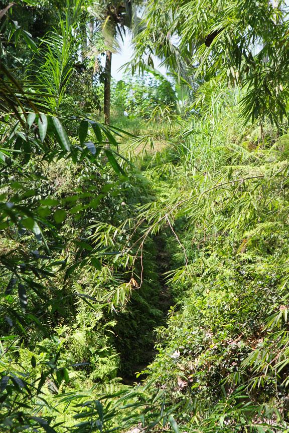 path-out-of-jungle-bali