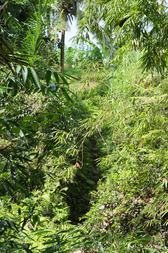 path-out-of-jungle-bali