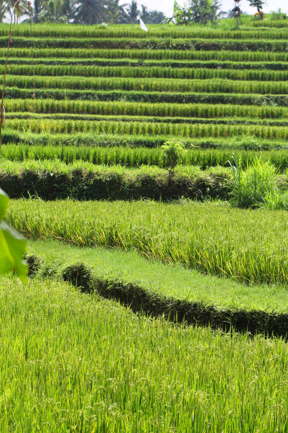 rice-terraces-bali-indonesia