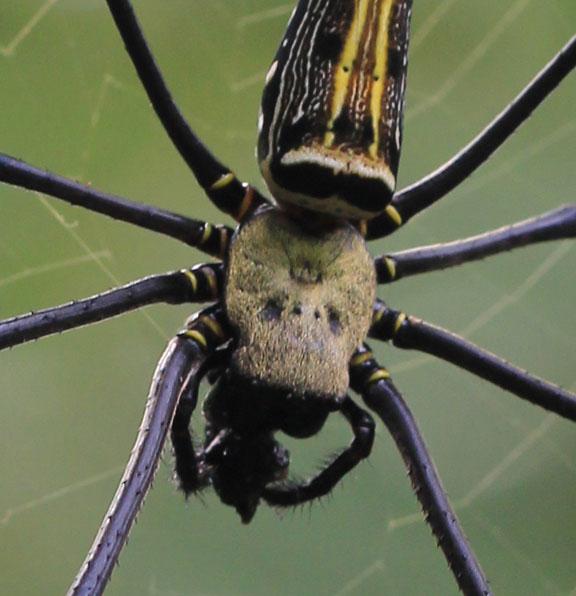 skull-spider-bali-extra-detail