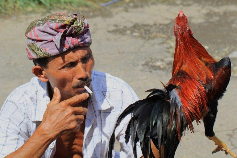 smoke-cockerel-kampung-bali