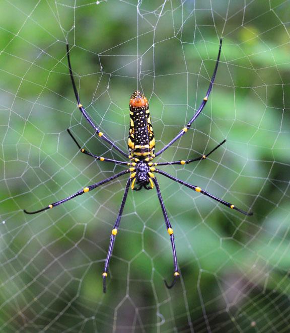 spiders-bali-indonesia