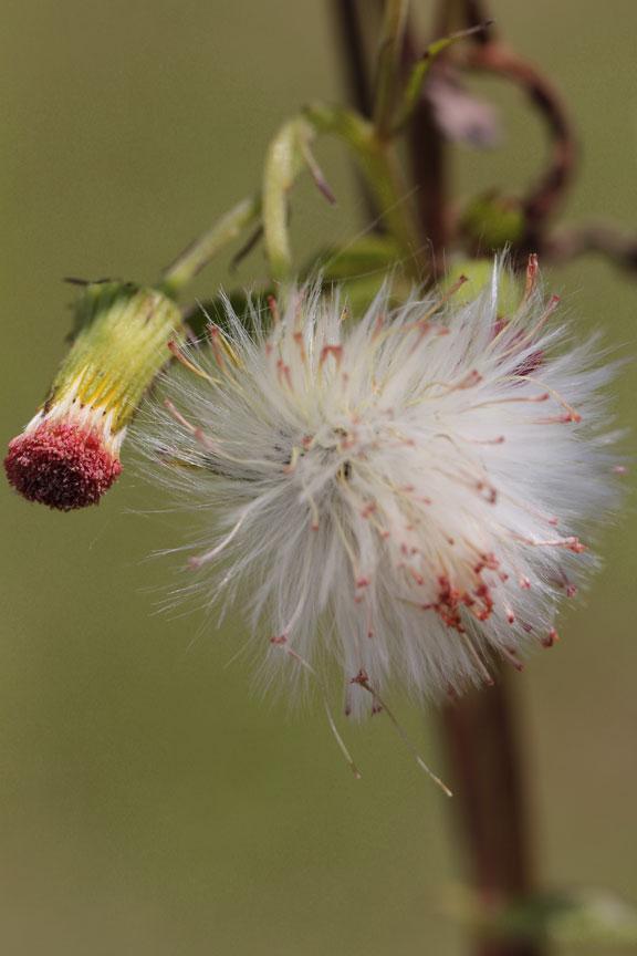 weeds-bali
