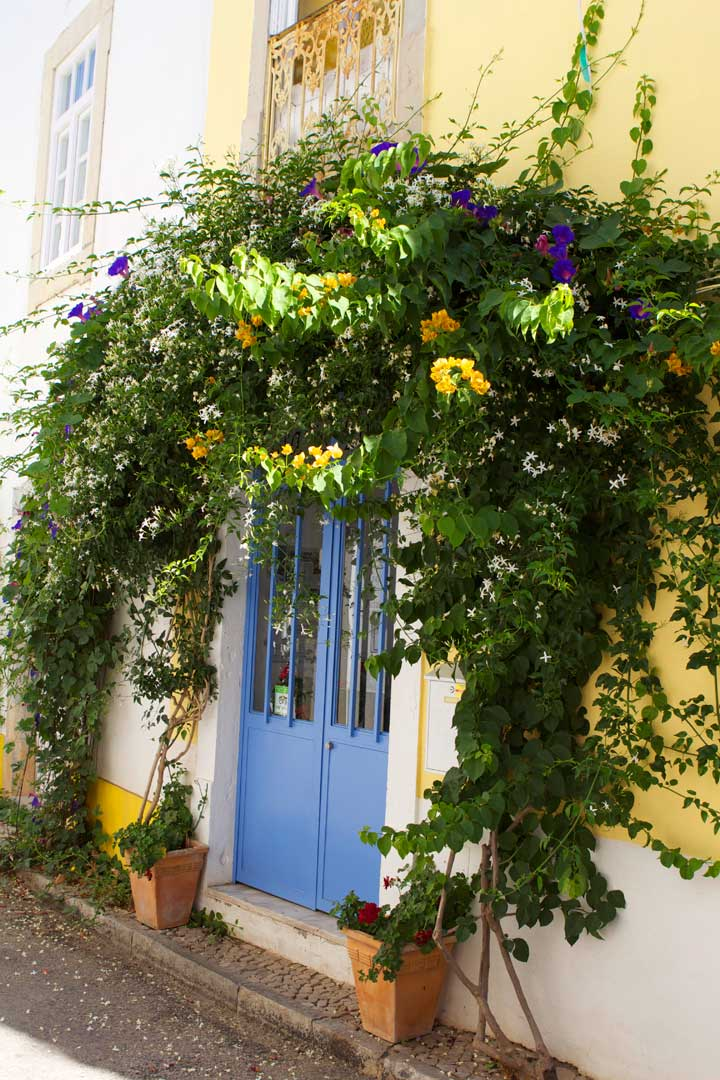 Tavira-algarve-flowers