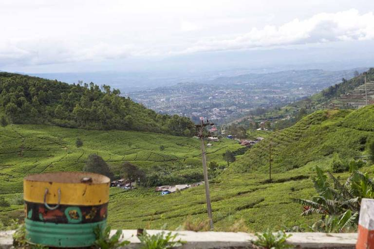 tea-plantations-punjak-pass-java