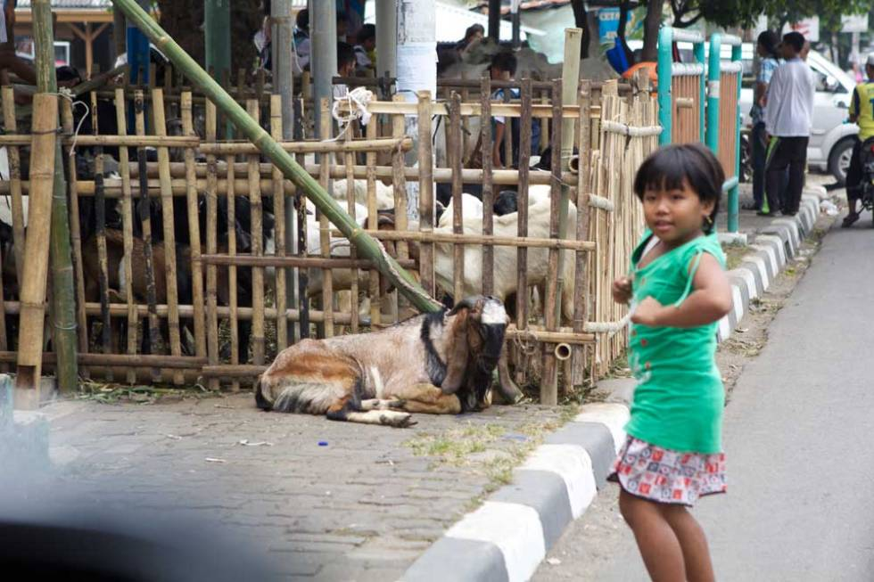 girl-and-goat