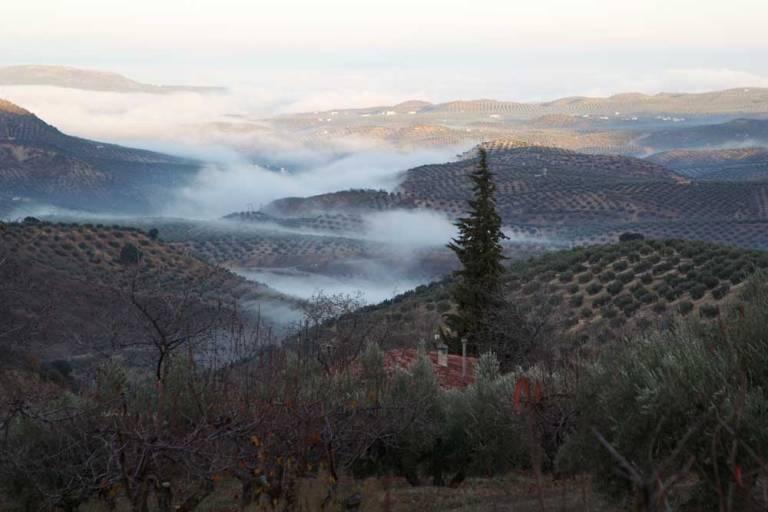 mist-landscape-one