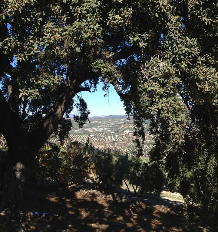 view-through-the-old-oak-tree