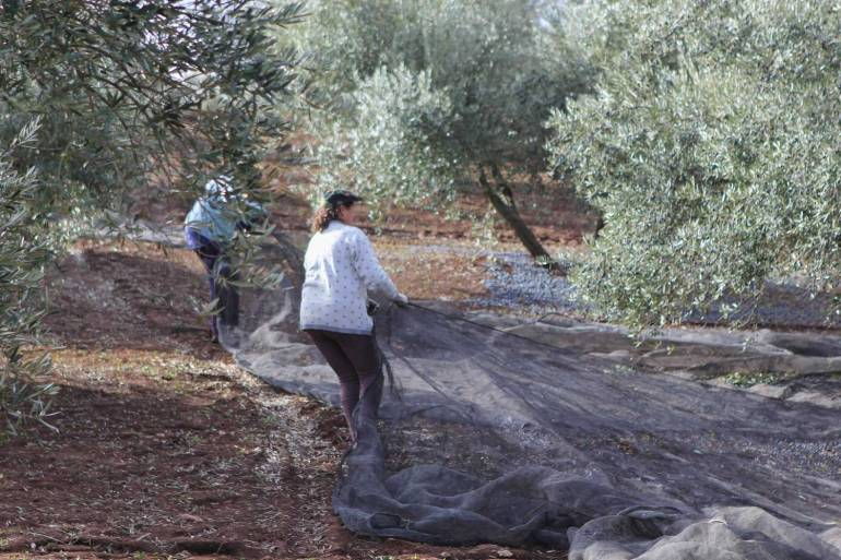 dragging-olive-nets