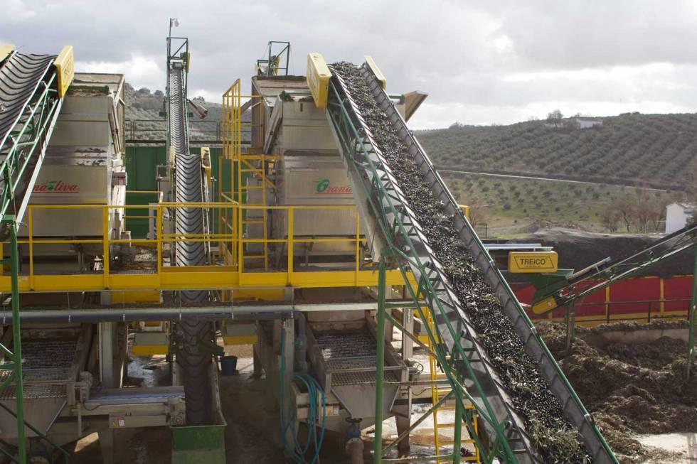 olives-on-conveyor-belt