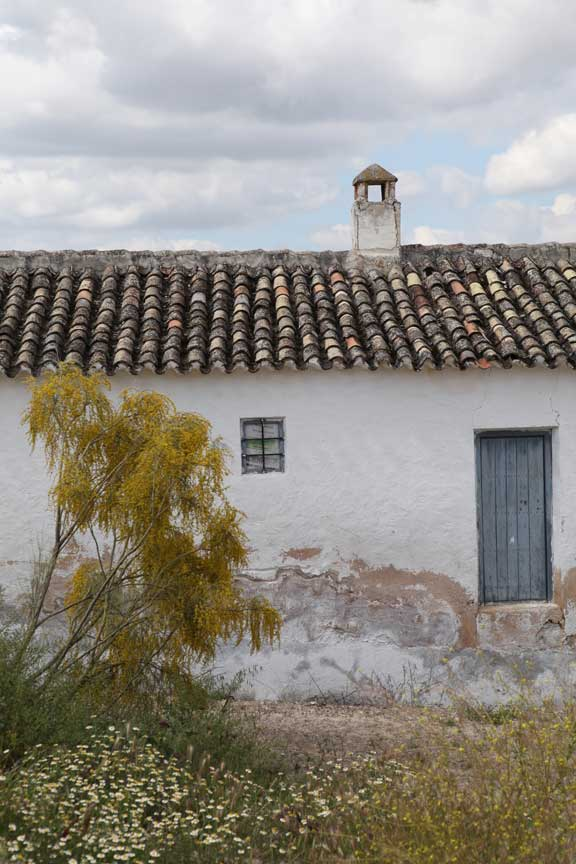 back-of-cortijo