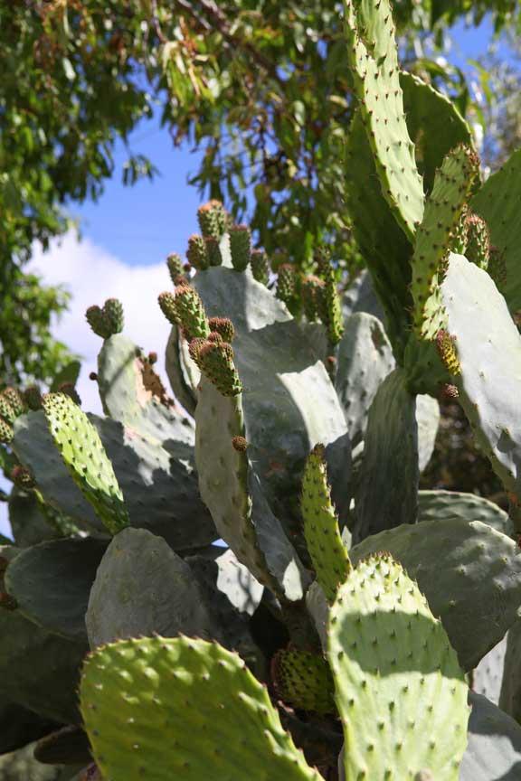 cacti--andulucia