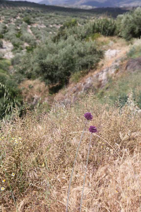 dry-vegetation--hillsides