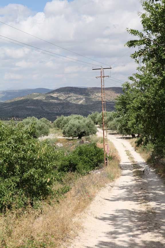 hills-and-olives---las-pilas