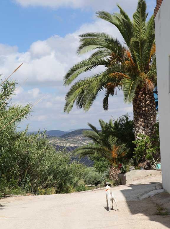 las-pilas-de-fuente-soto--palm-trees