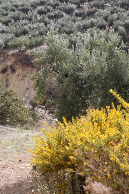 river-bank-and-yellow-broom