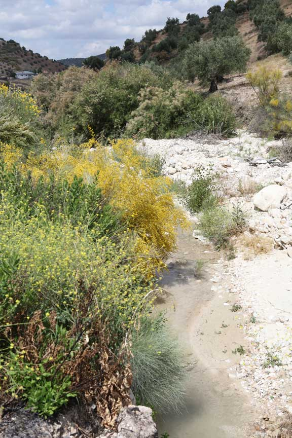 riverbed-and-broom