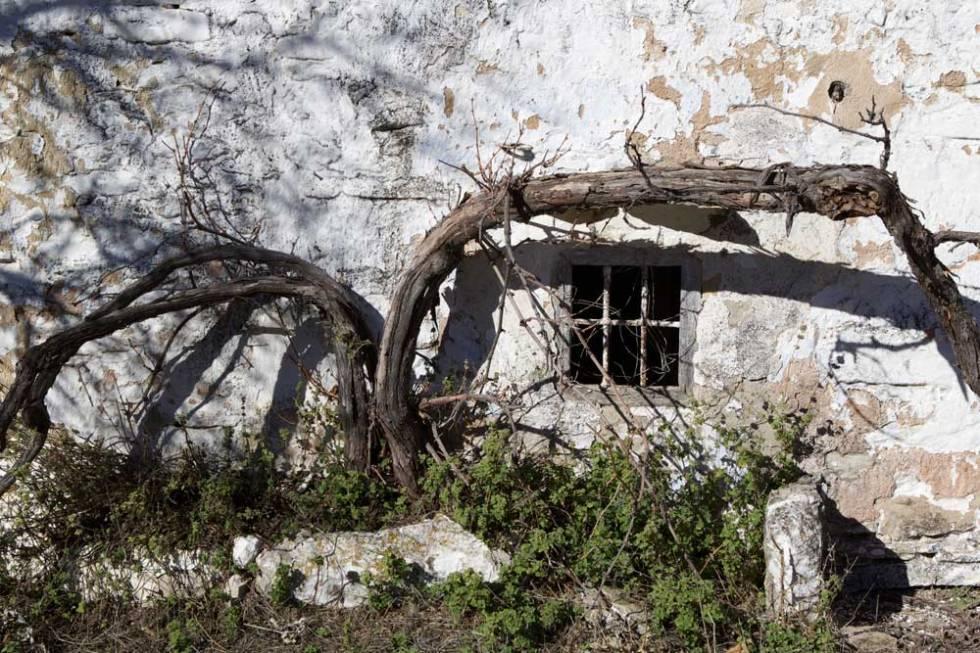 window-and-vine
