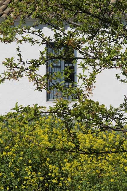 window-through-the-tree