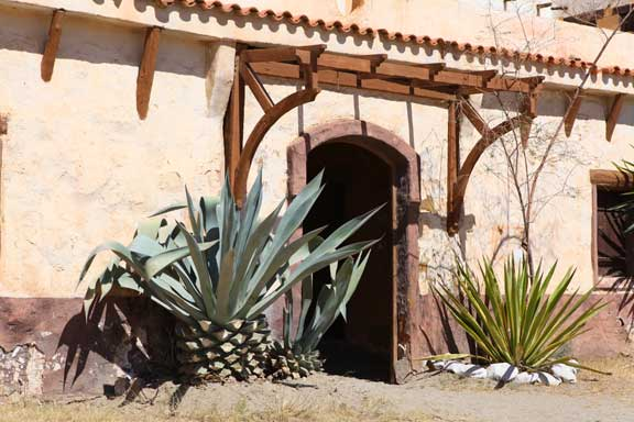 cactus-and-doorway---fort-bravo---lottie-nevin