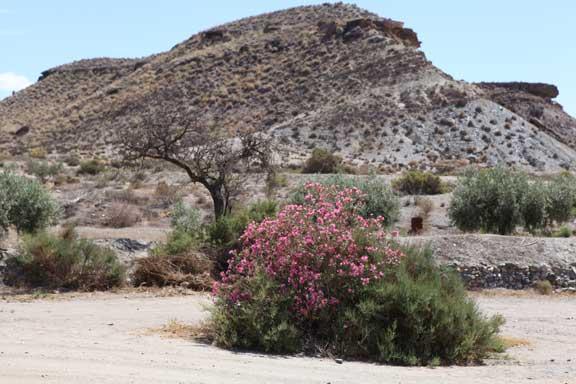 landscape---fort-bravo---lottie-nevin