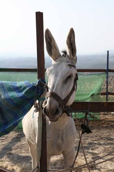handsome-donkey