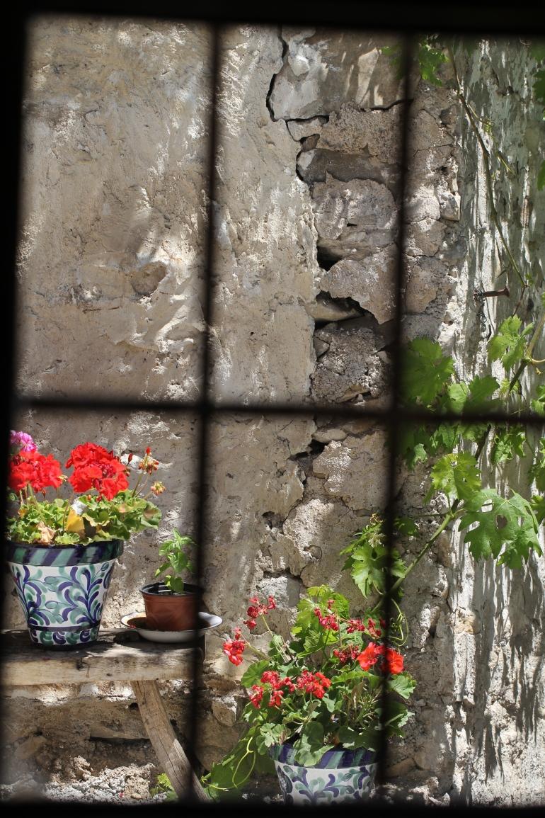 Through the glass. Geraniums.